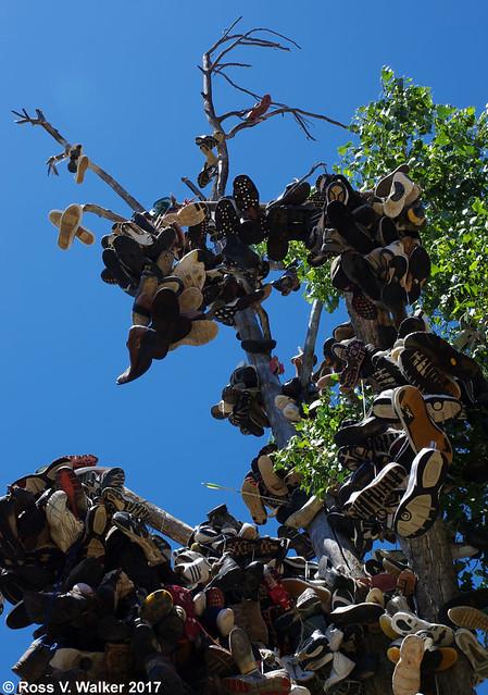 Shoe Hangin' Tree
