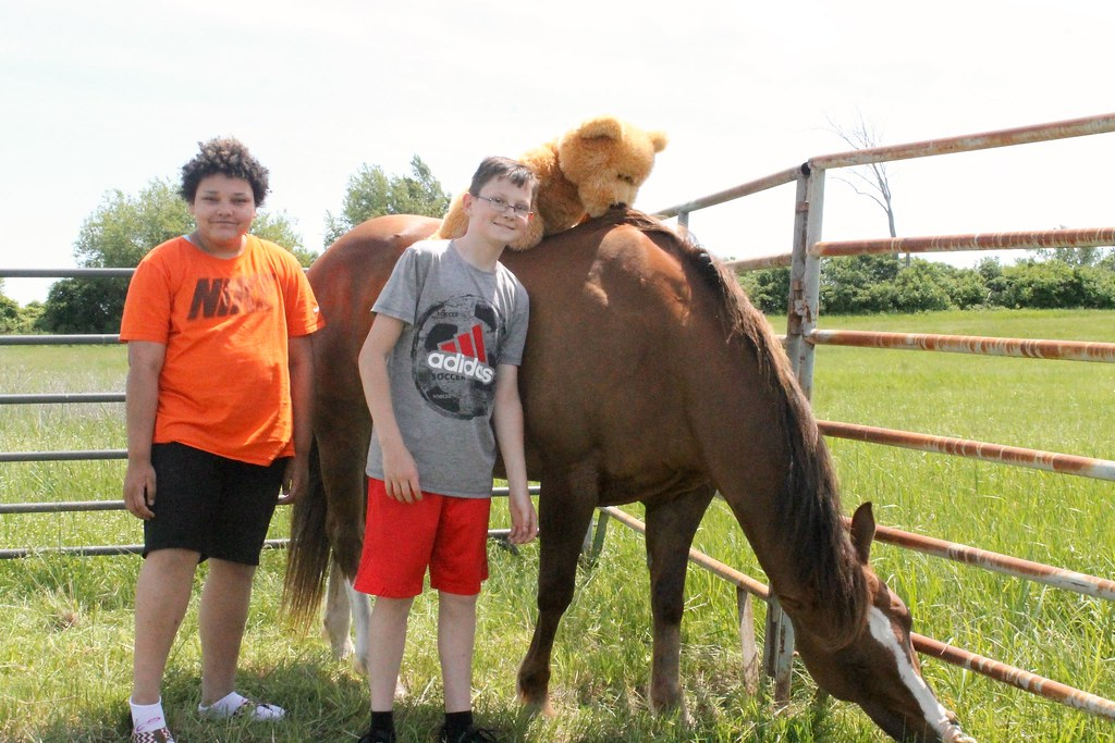 Assessment-Horse-Therapy-20170607 (16)