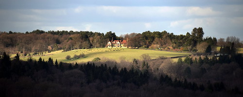 eastsussex ashdownforest nutley duddleswell february winter walk weald sunny sussex woods woodland forest