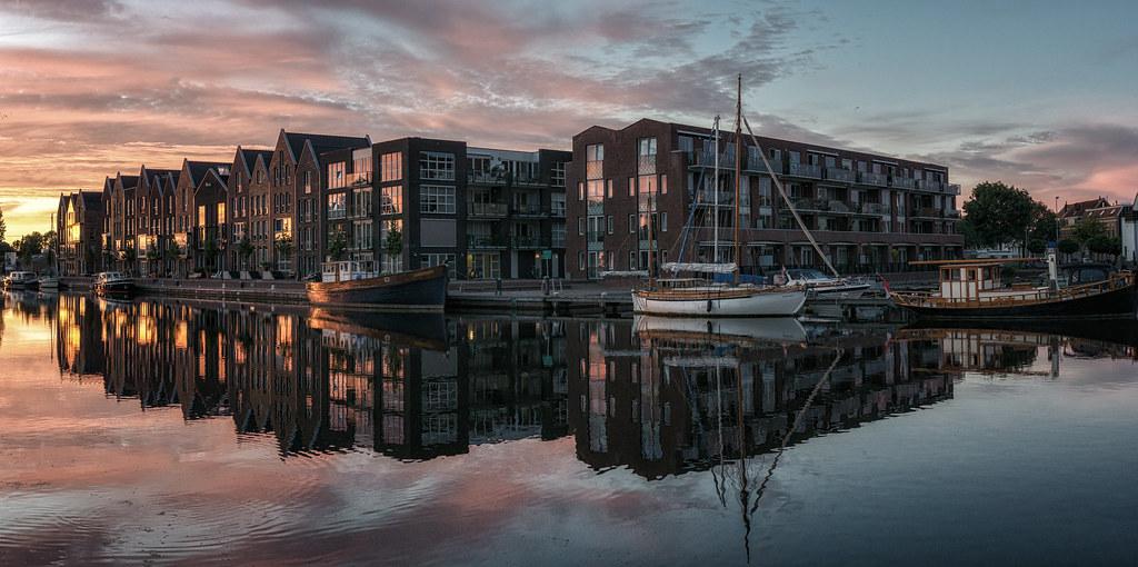 Morning glory, Haarlem
