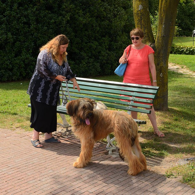 Stresa - Italy / The Briard dog
