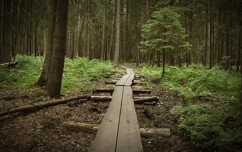finland summer duckboards pitkospuut landscape metsä metsämaisema nikond3200 nature naturephotography polku kesä maisema hiking drypassageway luontopolku luonnonmaisema luonto suomi metsäpolku retkeilyreitti vaellusreitti kansallispuisto nationalpark pitkokset explorewoods woodlandadventure woodland europe exploretheworld