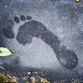 Footprint | by treehouse1977