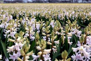 kukkapelto2   by anuhaa