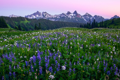 Tatoosh Range and Mount Rainier Wildflowers | by kevin mcneal