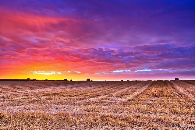 After the harvest - Après la moisson