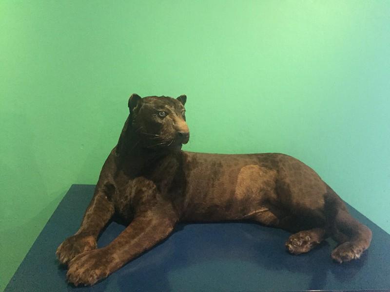 Museo Zoológico