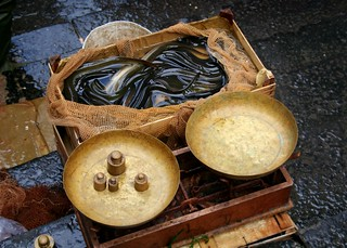 anguille (eels) | by fazen