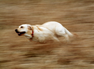 Ramona at Full Speed Ahead! | by WisDoc