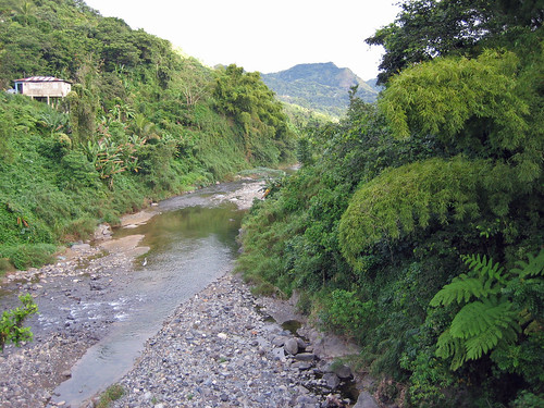 2005 cliff paisajes fern tree rio river puerto landscapes puertorico bamboo rico sd400 adjuntas bambu bambusa vulgaris cidra helechos oquendo