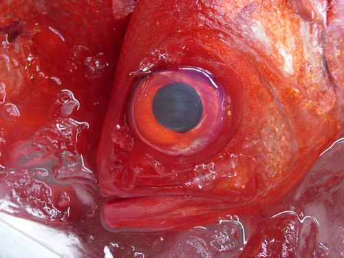 Fish story | by Jean-François Chénier