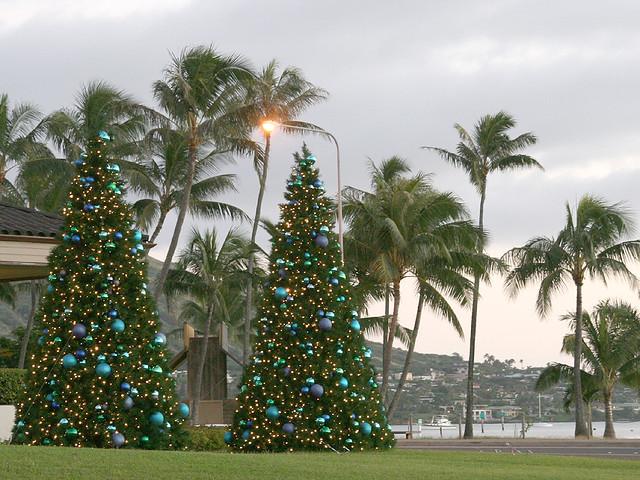 Traditional And Hawaiian Christmas Trees Last Christmas Tr Flickr