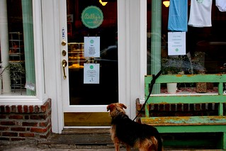 Dog Waiting For Billy's | by Dan Dickinson