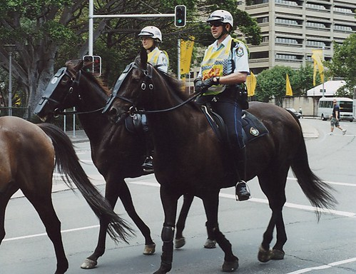 Image result for nsw police horse