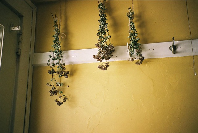 Drying Herbs in the Back Hall