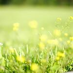 Yellow Flower Day