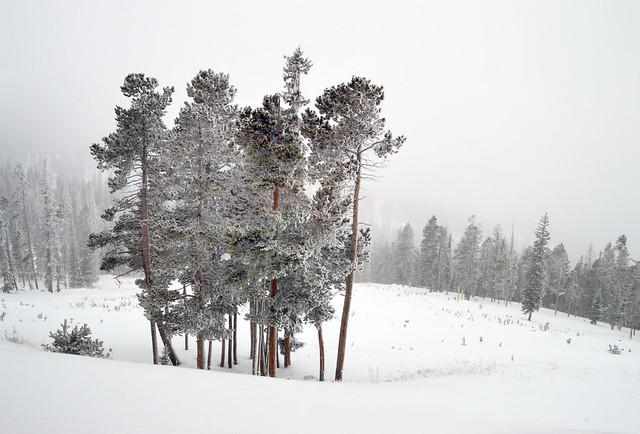 Above the frost line. Winterpark Colorado