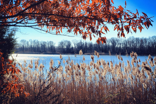 landscape lake federicoscotto fedesk8 fujifilmxm1 nature buckscounty