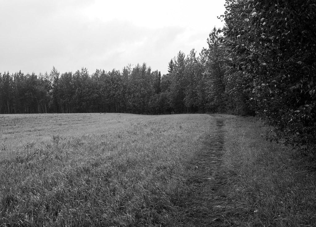 July 24 2017 A Rainy Morning at Creamer's Field-3