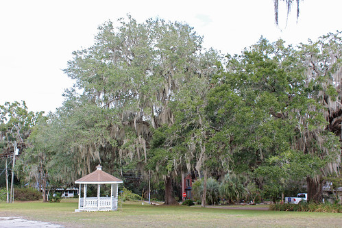 landscape park gazebo trees spanishmoss brooksville florida