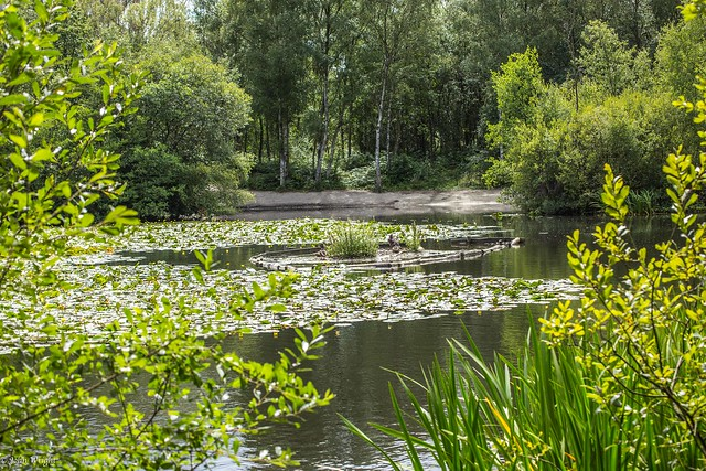 Lightwater country park July 17-14.jpg