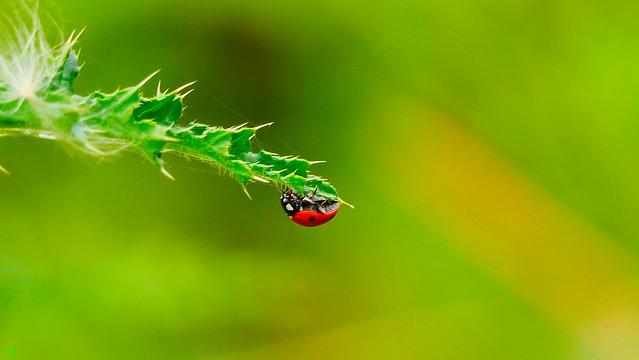 It's a Bug