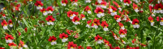 floral art impressionism 2