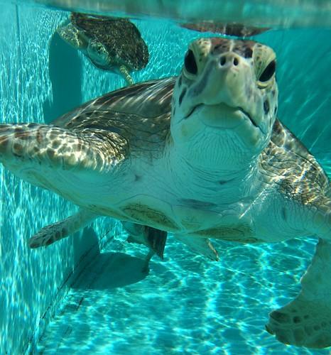 Underwater edited
