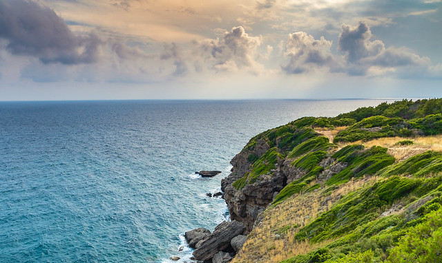 coast Okurcalar