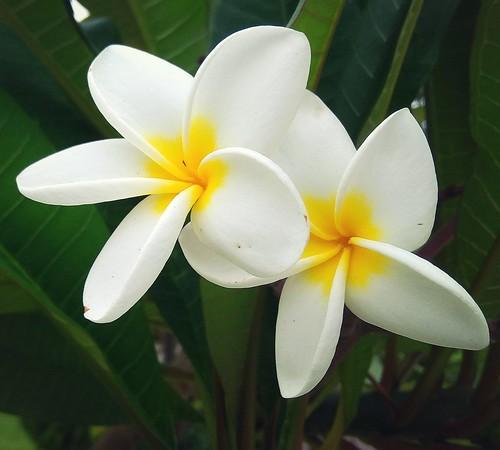 xiaomi white macro flower 2017