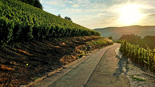 saarburg winary morning sunrise happyness germany road mountains sky clouds vines samsungs8