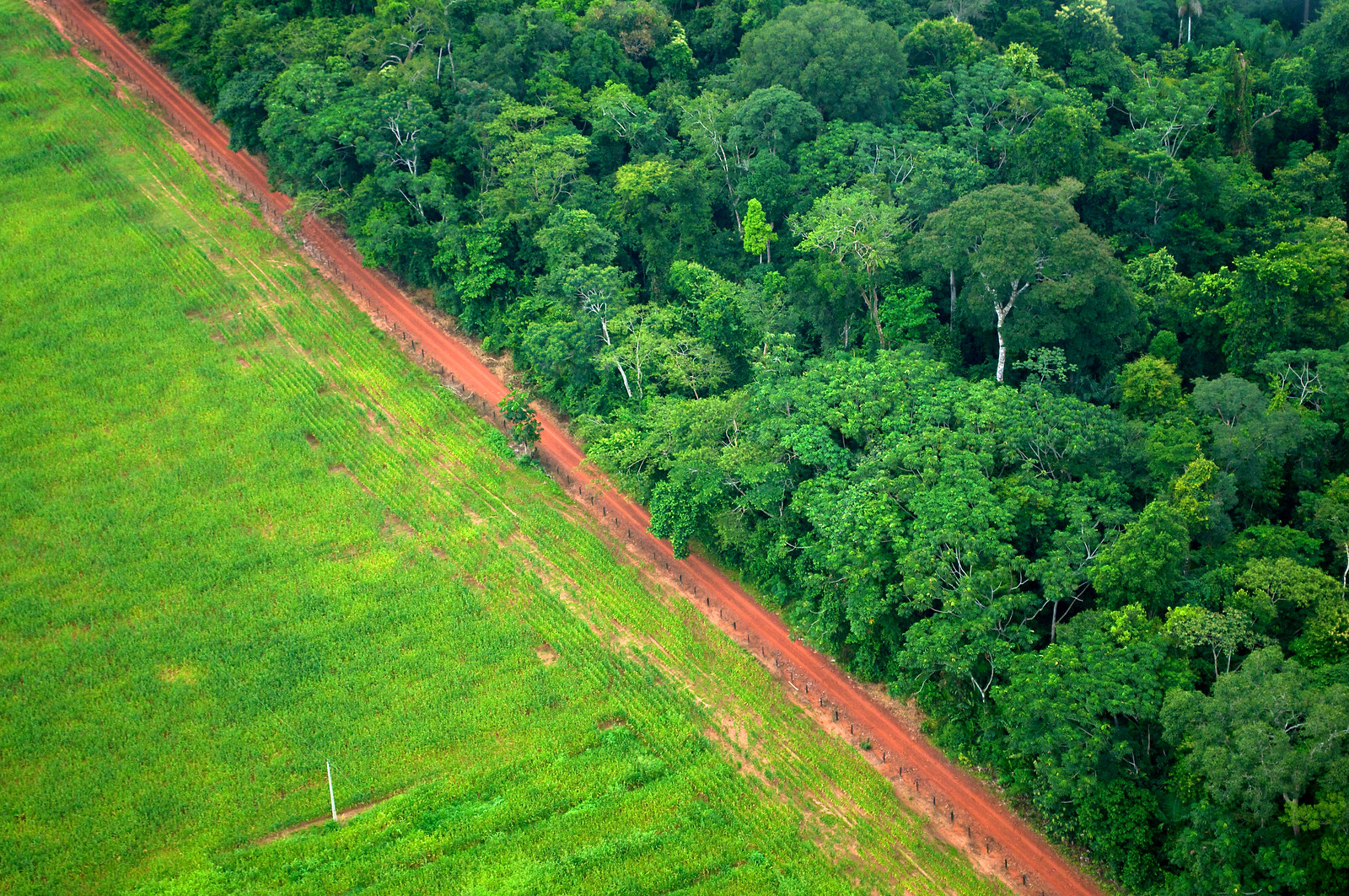 photo of deforestation near Rio Branco, Acre, Brazil