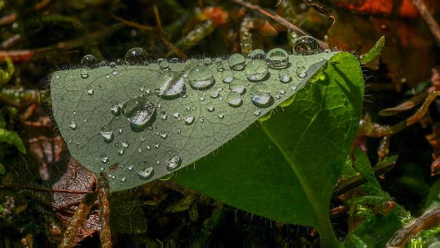 Regentropfen - Rain drops (Explore)