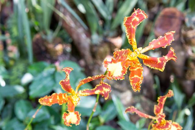 Flowers in Botanic Garden Singapore