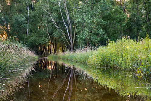 rollinssavanna lakecountyforestpreservesdepartmentlcfpd phenologyphotography lcfpd summer nature grayslake illinois unitedstates us