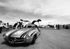 Gull in the Istmo de Tehuantepec - Mercedes-Benz 300SL La Carrera Panamericana.