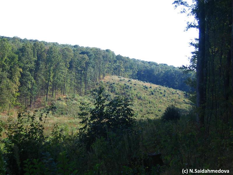 Вырубка в дубовом лесу