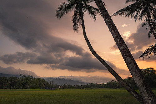 rice paddies sunset colour borobudur