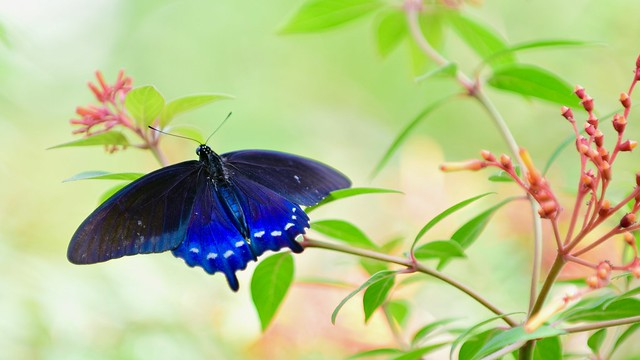 Brilliant Blue in Nature