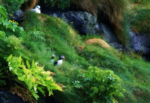 Residents on the cliffs at Gjógv | by Jaedde & Sis