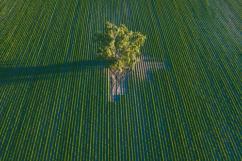 dronas 2017 europe djieurope drone aerial aerialphotography dji djimavicpro mavic pro mavicpro birdseye landscape djiglobal