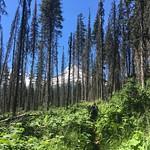 Lush vegetation on the Gunsight Trail