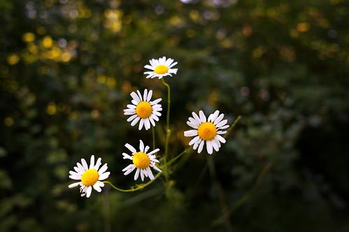Flowers | by rossenvn