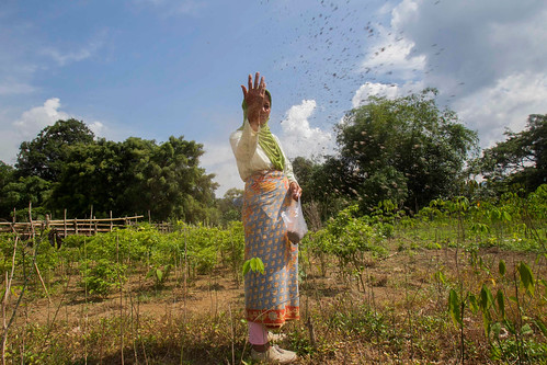 Agroforestry in Lubuk Beringin village | by CIFOR