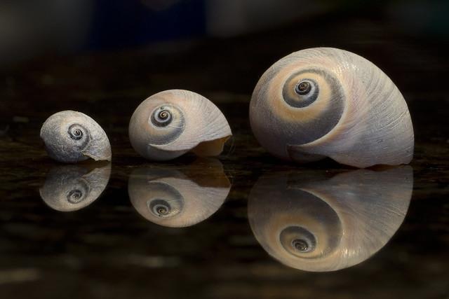 Three Spirals