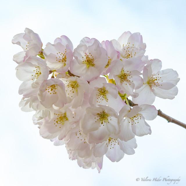 Flowers-7674
