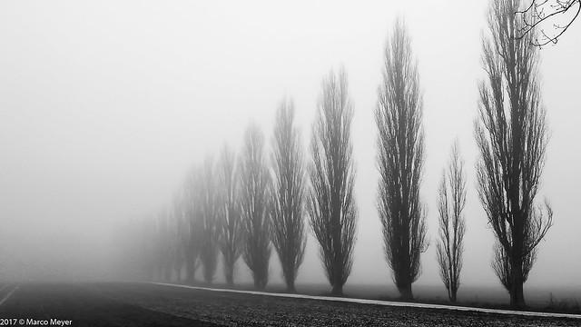 Nebelpappel