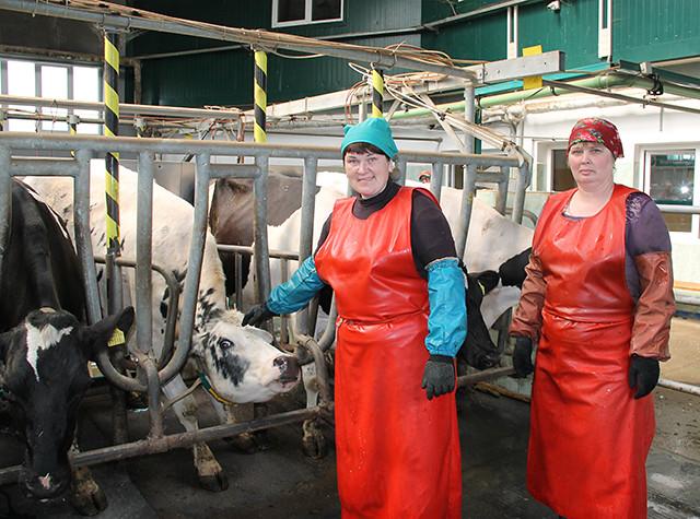 Суровые белорусские доярки Severe belorussian milkmaids