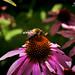 Buzz Buzz by Hi-Fi Fotos