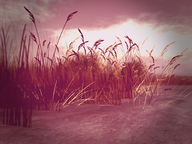 White Dunes Estates - Marsh Grasses